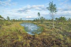 全国沼泽公园在拉脱维亚 图库摄影