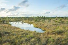 全国沼泽公园在拉脱维亚 库存照片