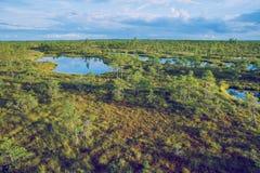 全国沼泽公园在拉脱维亚 免版税库存照片