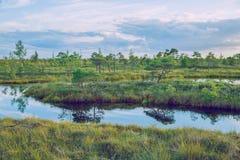 全国沼泽公园在拉脱维亚 库存图片