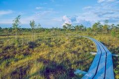 全国沼泽公园在拉脱维亚 免版税库存图片