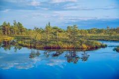 全国沼泽公园在拉脱维亚 免版税图库摄影
