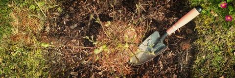 全景、蓝莓灌木和一点铁锹在庭院里 免版税库存照片