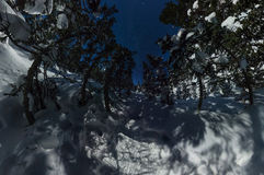 360全景冬天森林在满天星斗的天空下 库存图片