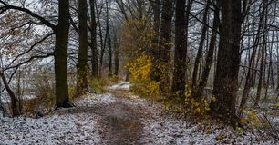 全景冬天森林道路穿过老树 免版税图库摄影