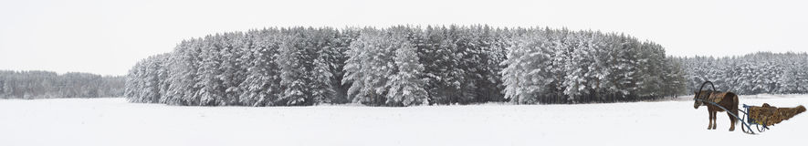 全景冬天横向 免版税库存图片