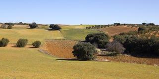 全景在卡斯提尔La Mancha,西班牙的领域 免版税库存照片