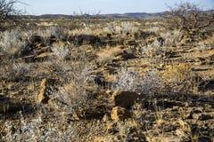 全景在纳米比亚 免版税库存照片