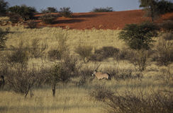 全景在纳米比亚 免版税图库摄影