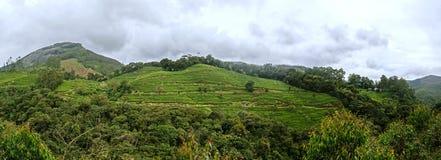 全景在Munnar在西Ghats,喀拉拉 图库摄影