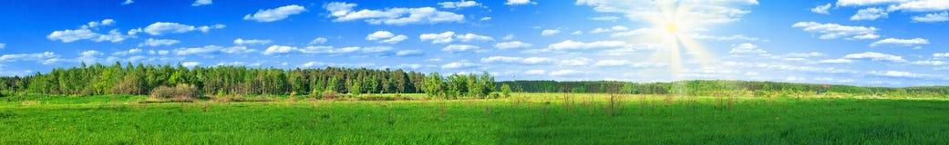 全景夏天的森林 库存图片