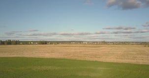 全景大金子和绿色领域反对天空蔚蓝 影视素材