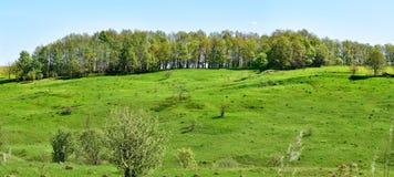 全景小山 俄罗斯的欧洲部分 平稳的倾斜 森林传送带 一个晴朗的春日 图库摄影