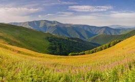 全景山脉 夏天与花的山风景 免版税库存照片