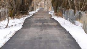 全景框架长的被铺的路在耸立的不生叶的树机盖下在冬天 库存图片