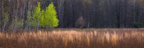 全景森林的草甸 库存图片