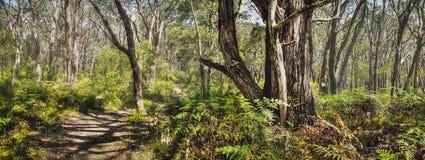全景森林自然痕迹 免版税图库摄影