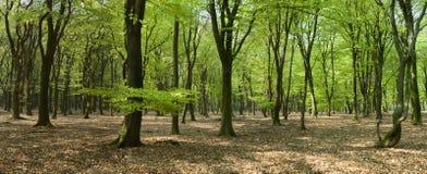 全景森林 库存照片