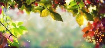 全景横幅/背景-五颜六色的秋天/秋天离开-书刊上的图片, Bokeh,透镜火光-文本,身体,拷贝空间 图库摄影