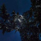 360全景瑞士山中的牧人小屋和雪板在星下的冬天森林里 库存图片