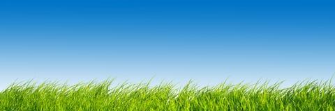 全景的草绿色 免版税库存图片