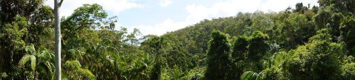 全景的雨林 免版税库存照片