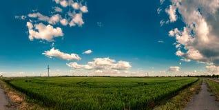 全景的Wheatfield 库存图片