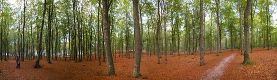 全景秋天的森林 免版税库存照片