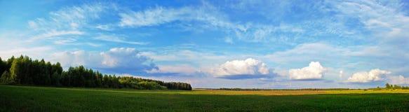 全景绿色的草甸 库存图片