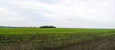 全景绿色领域在早期的秋天 免版税库存图片