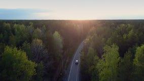 全景自动驱动通过杉木森林和晚日落 股票视频