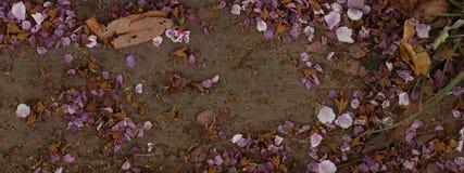 全景自然背景,回家桃红色花falli 免版税库存图片