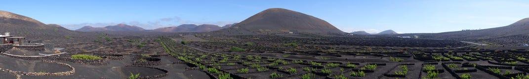 全景葡萄种植兼葡萄酿酒业在兰萨罗特岛,加那利群岛海岛上的La杰里亚  免版税图库摄影
