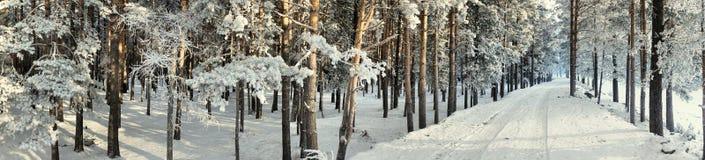 全景路冬天 库存照片