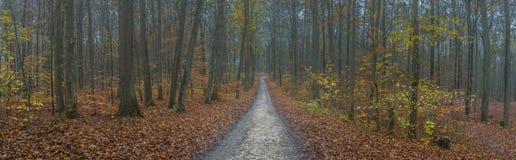 全景道路穿过有薄雾的秋天森林 库存照片