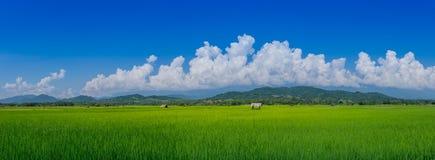 全景风景亚洲绿色米领域和农夫小屋在雨季 免版税库存图片