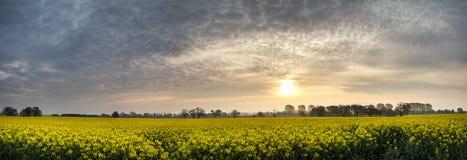 全景风景油菜籽油菜领域在散开朦胧的早晨 库存图片