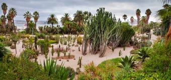 全景仙人掌公园在Montjuic巴塞罗那 免版税库存图片