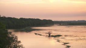 全景 卡萨纳雷沼泽地平原,哥伦比亚 影视素材