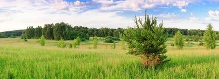 全景绿色森林 免版税图库摄影