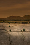 全球性变暖,死了和在干旱的季节,看法的破裂的土壤  免版税图库摄影