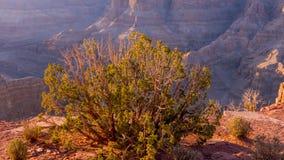 全部亚利桑那的峡谷 免版税库存图片