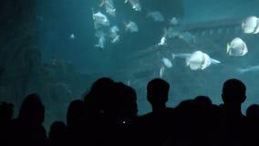 全部人在巨型水族馆附近现出轮廓 股票录像