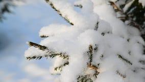 全部在树枝的雪 股票视频