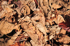 全部干燥叶子 免版税库存图片