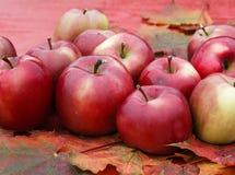 全部成熟红色苹果在五颜六色的槭树l的一张木桌上说谎 库存图片