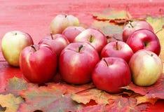 全部成熟红色苹果在五颜六色的槭树l的一张木桌上说谎 免版税图库摄影
