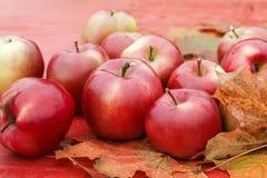 全部成熟苹果在五颜六色的槭树leav的一张木桌上说谎 库存图片