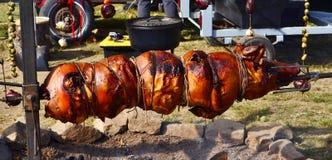 全部猪的烘烤 库存图片