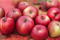 全部红色苹果在五颜六色的槭树叶子的一张木桌上说谎 库存图片